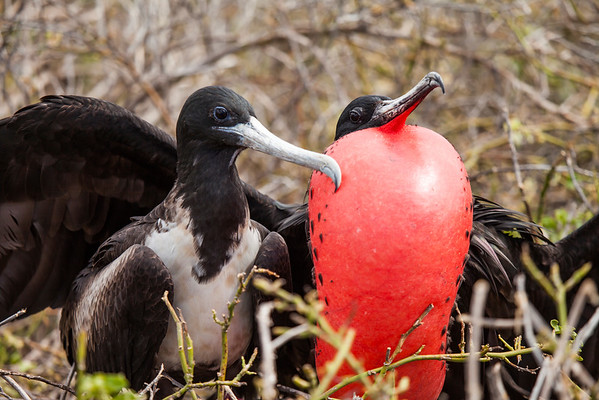 Galapagos Impressie
