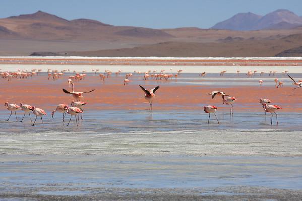 4 daagse Jeeptour Tupiza- Salar de Uyuni - San Pedro