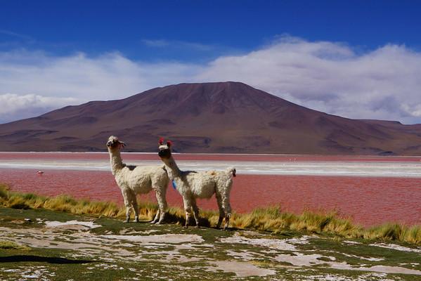Jeeptocht San Pedro naar Uyuni