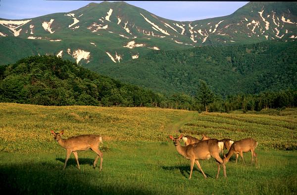 Hokkaido impressie