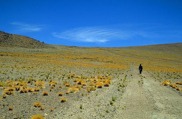 Laguna Salar de Atacama